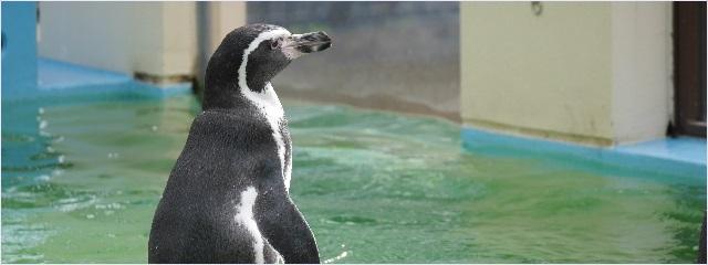 用語集 ペンギンアップデート ペンギンアップデートが嫌うサイトの特徴